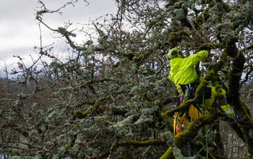 experienced Marlow Bottom arborists are needed