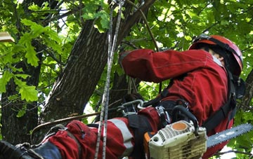 hiring professional Marlow Bottom tree surgeons