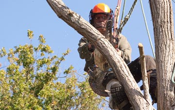finding qualified Marlow Bottom tree surgeons