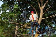 Marlow Bottom tree crown reduction services